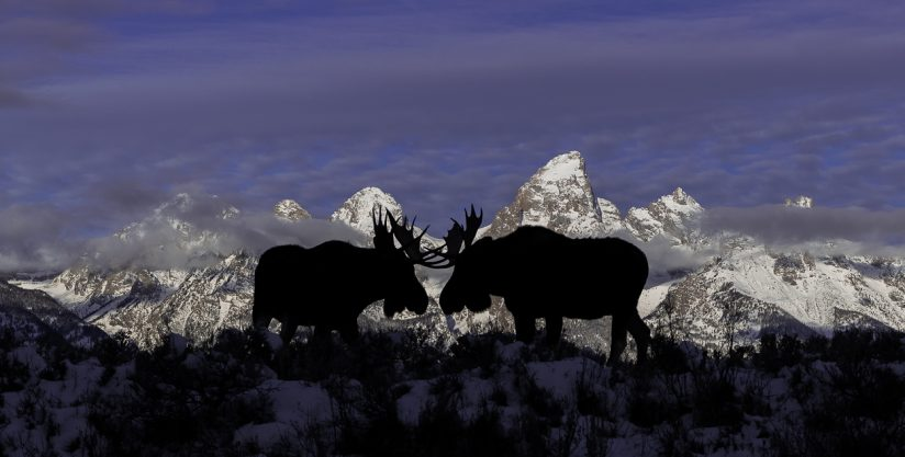 The Moose and the Mountains