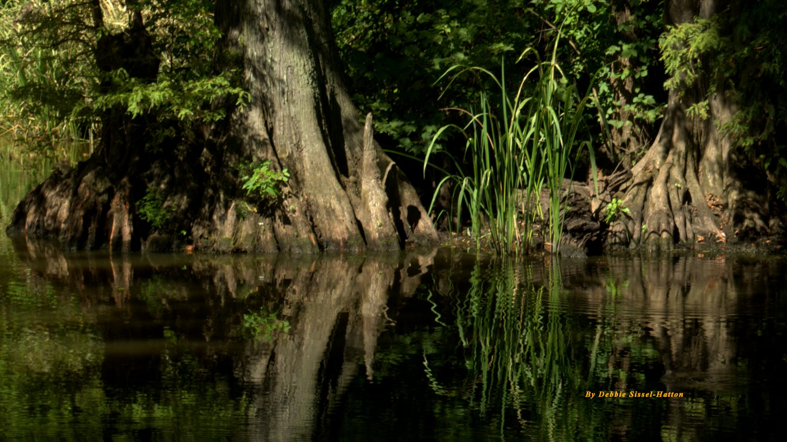 Reflections of Swamp