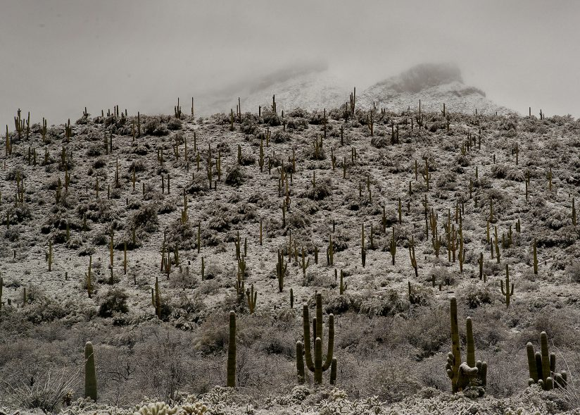 Sonoran Winter