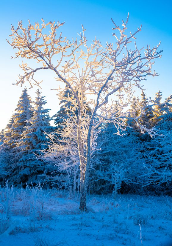 Winters Touch