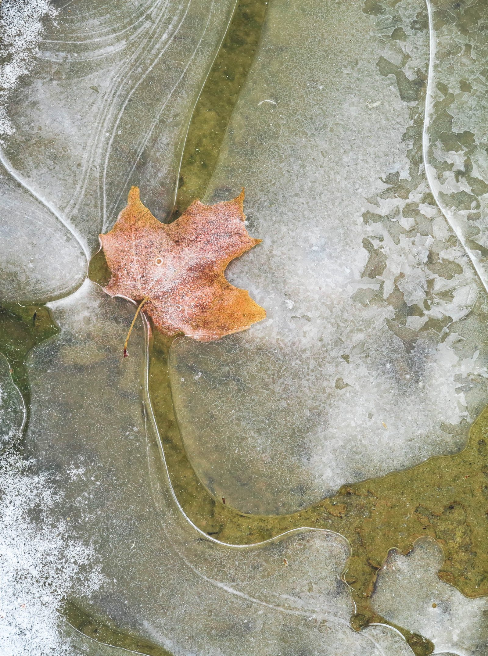 Frozen Fall Color