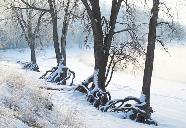 Trees Along the Mississippi River