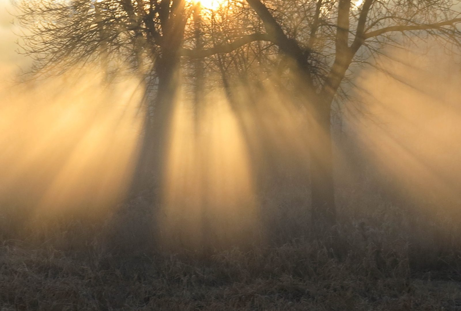 Sunlight through the Fog