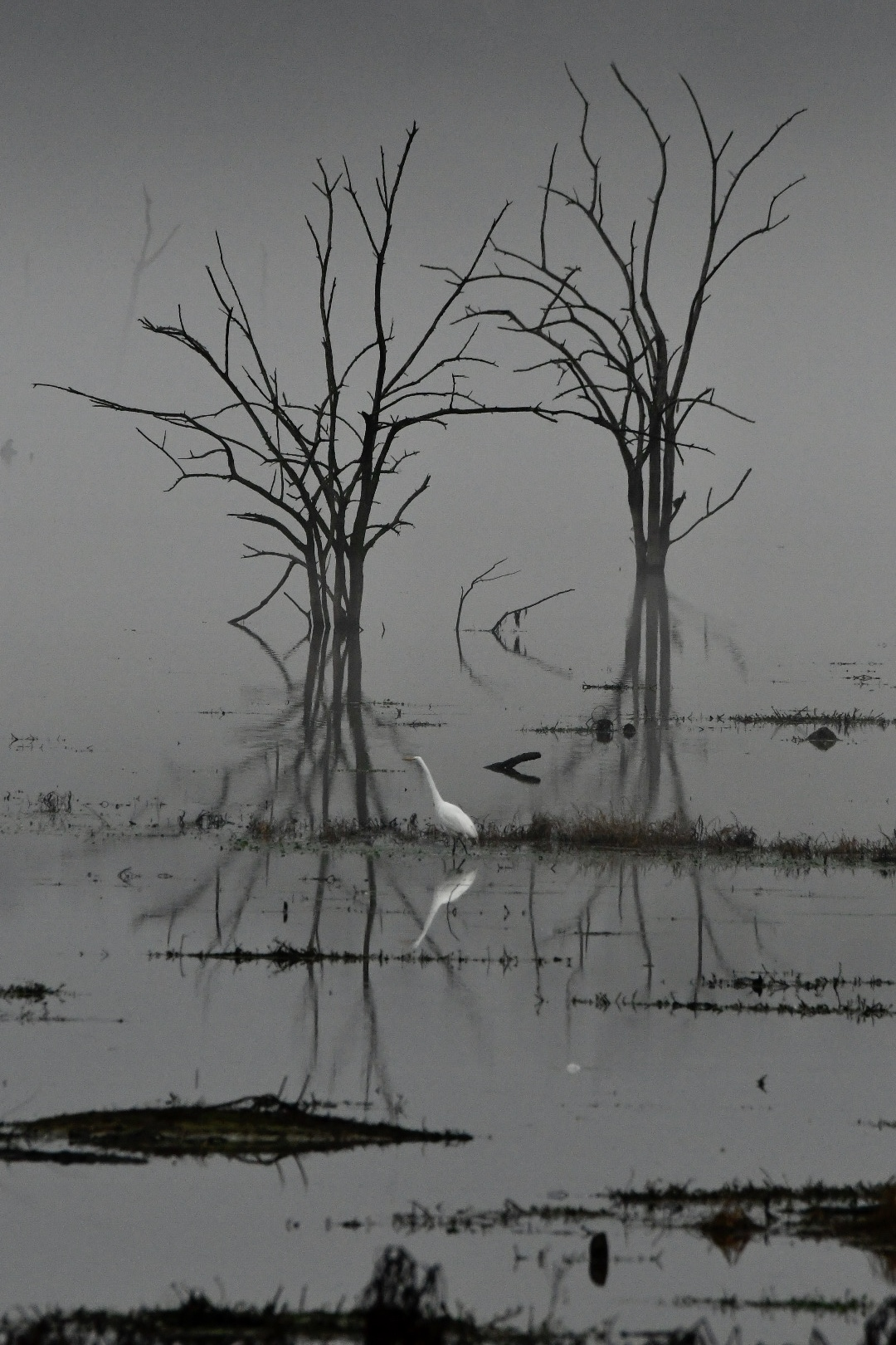 Solo hunting on the foggy Lake Fork
