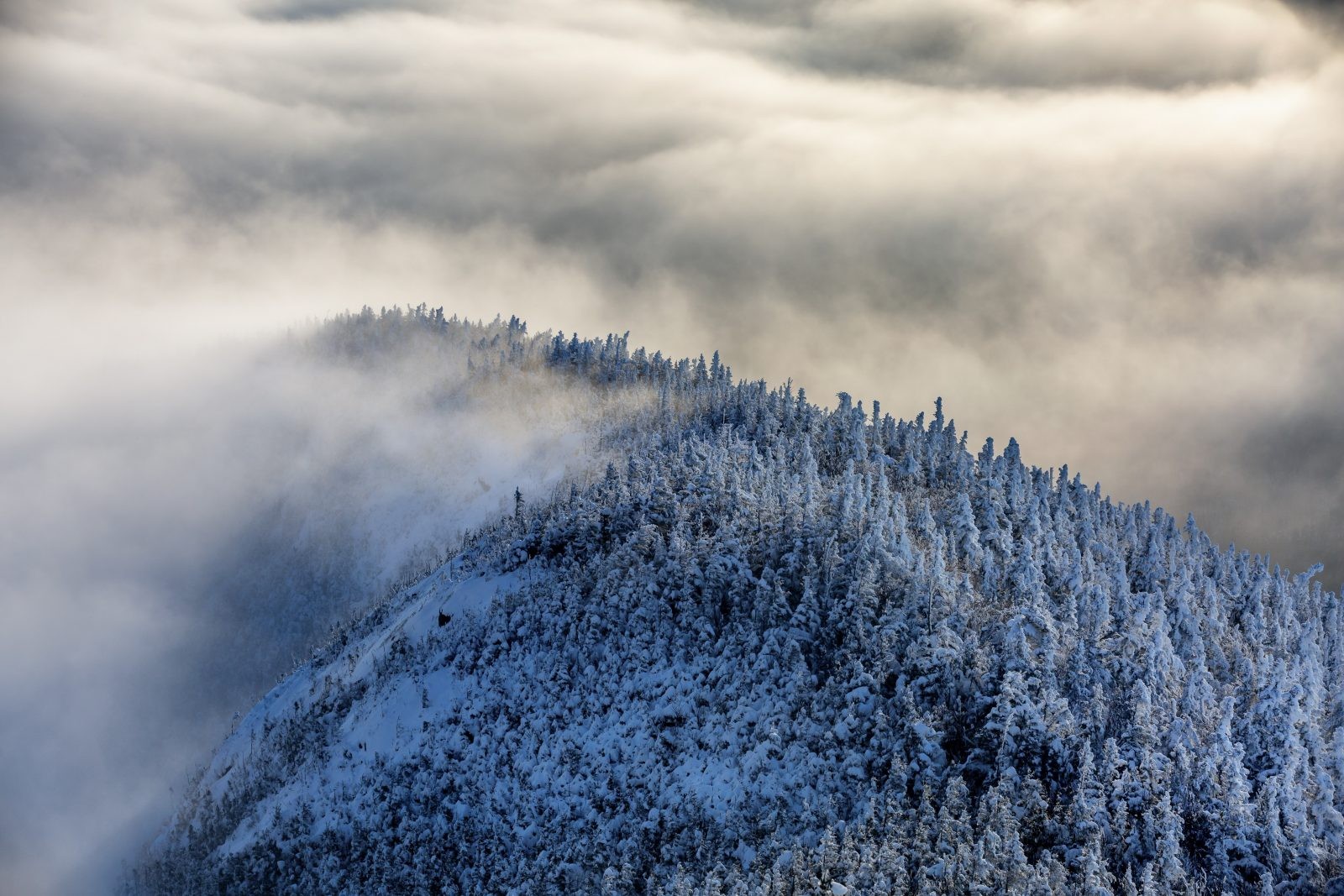 Frosted Ridge