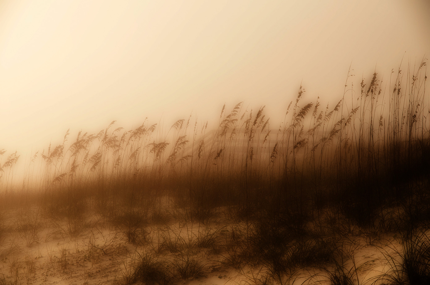 Sea Oats in the Mist