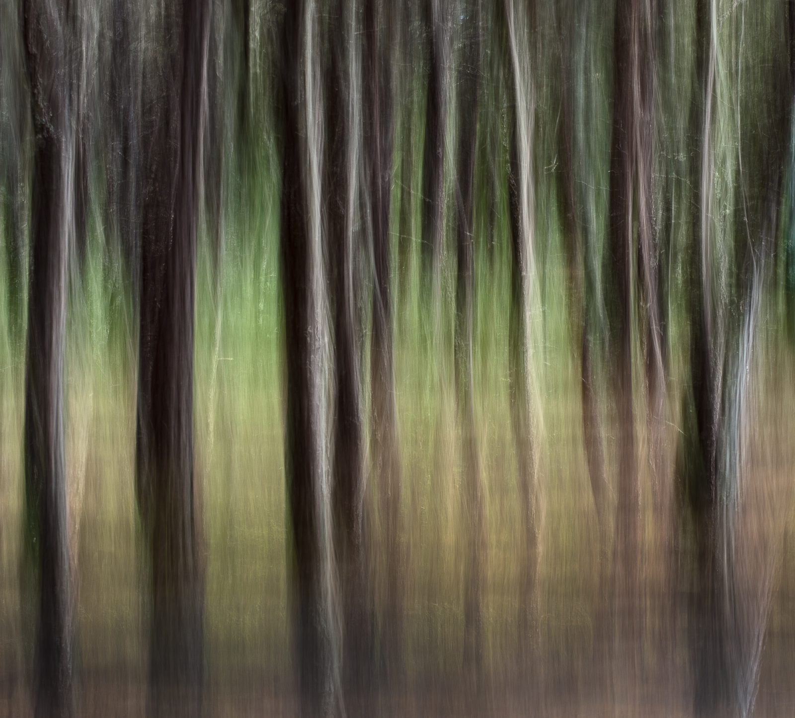 Enchanted Forest #1