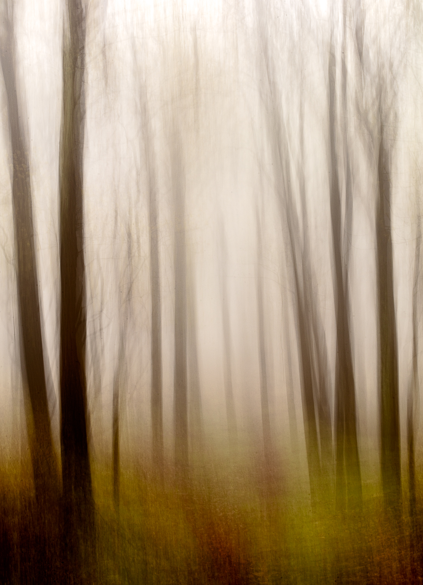 Enchanted Forest #2