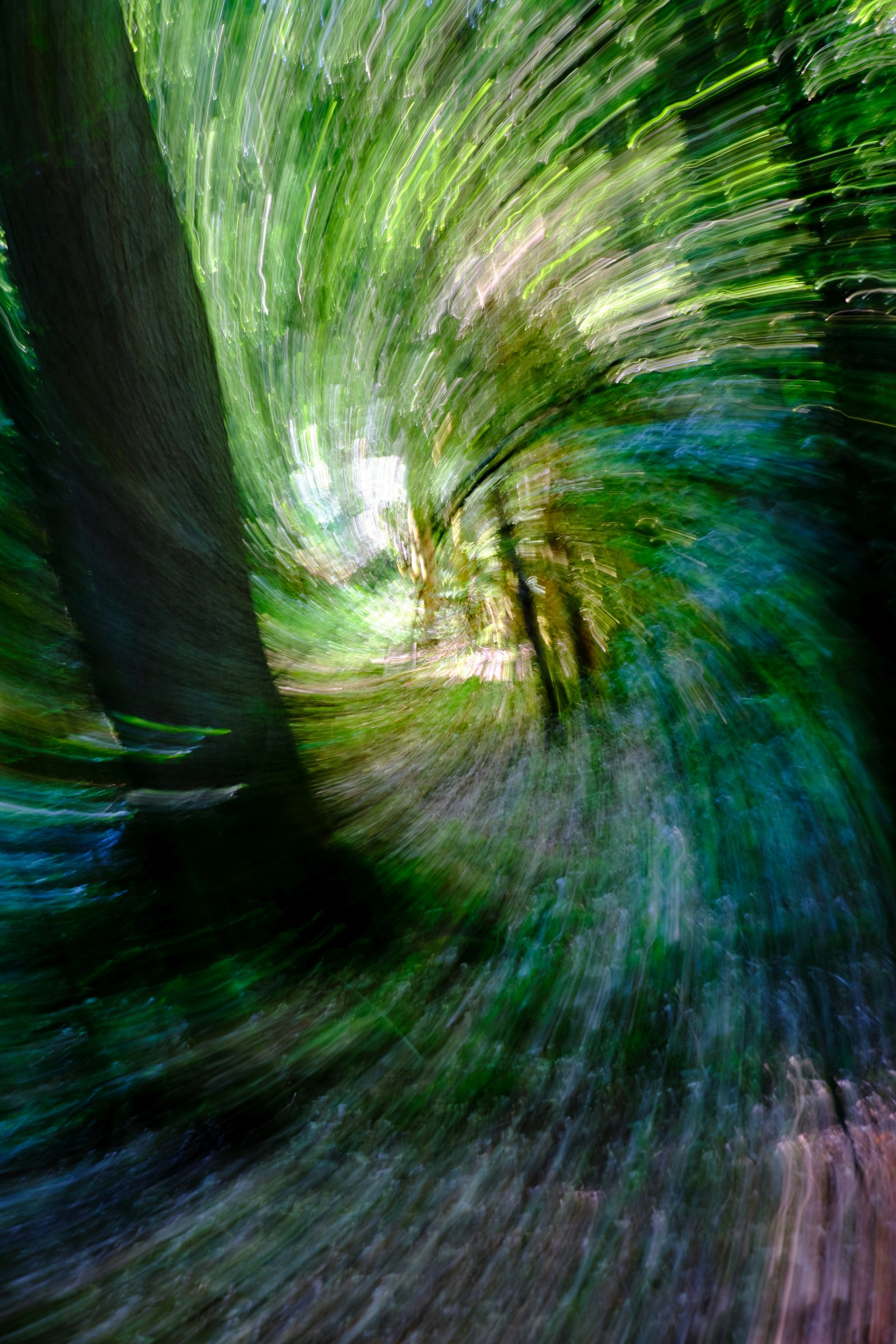 Whirlwind forest