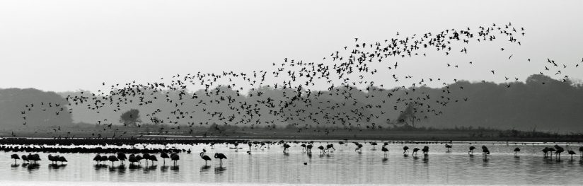Thol lake bird sanctuary