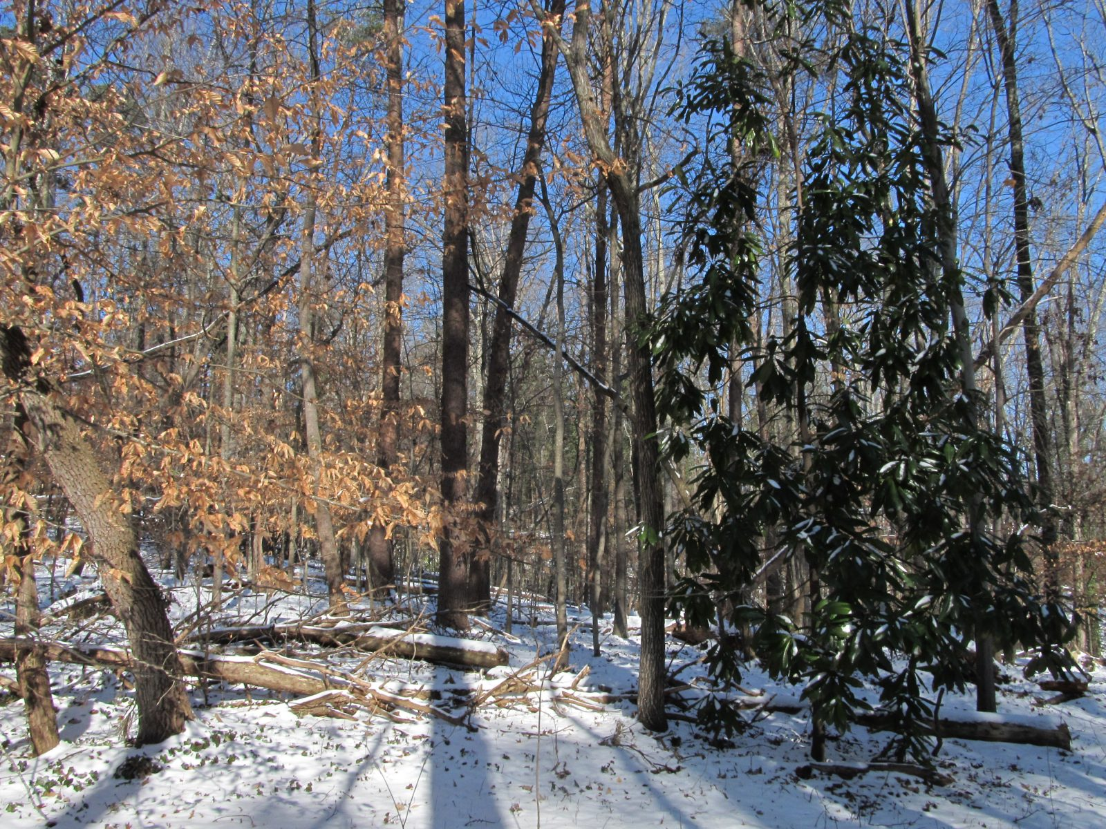 The Greenway in Winter4