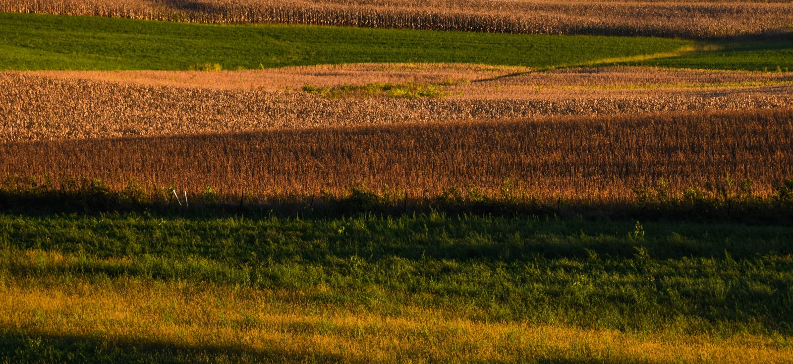 Layers in the Fields