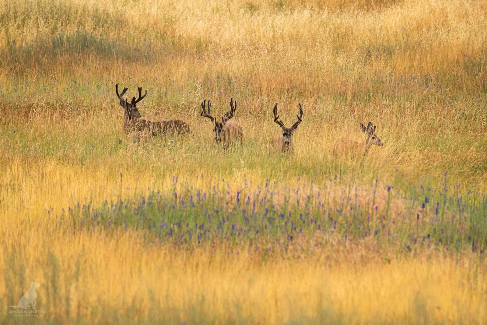 Bucks In A Row