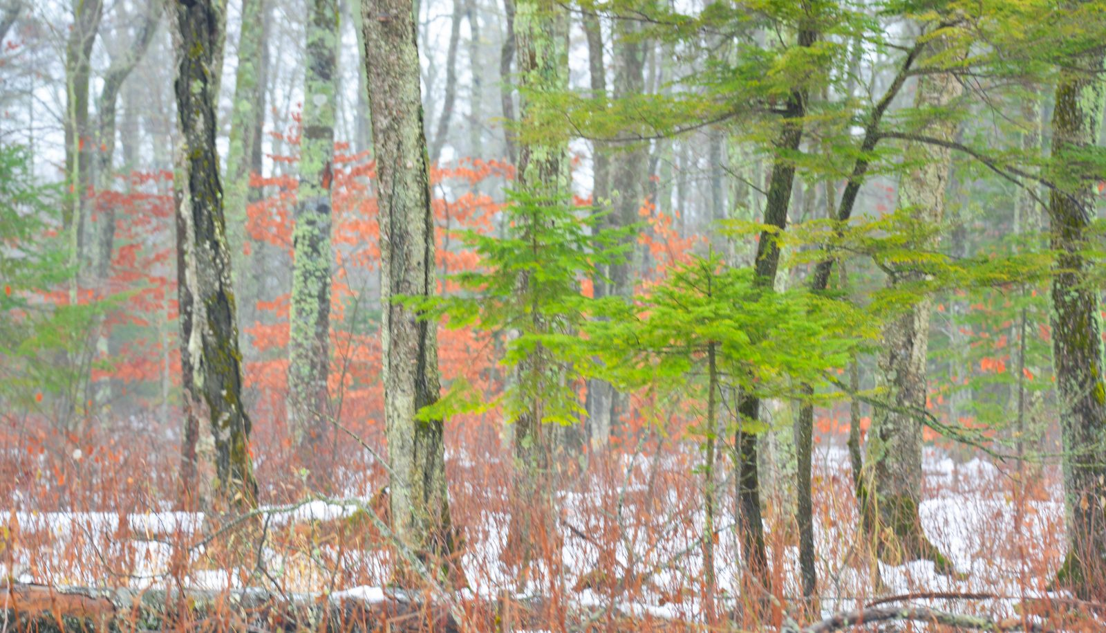 The Color of the Woods