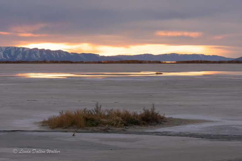 Great Salt Lake Sunset with brush