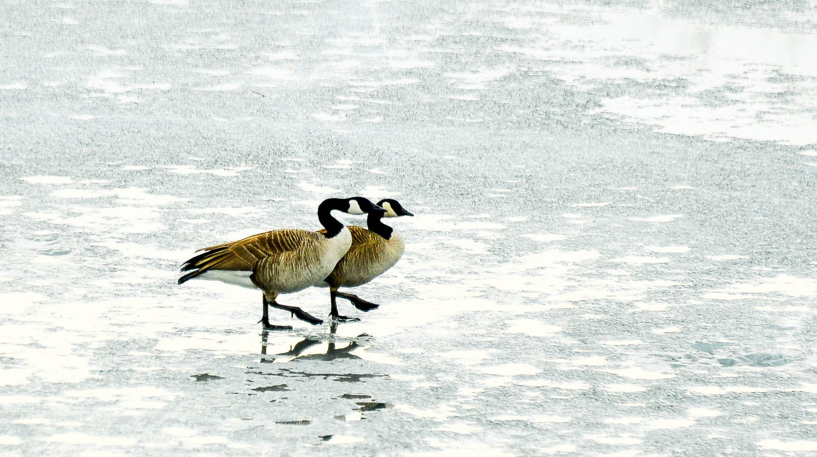 Walking Together on a Wet Frozen Lake