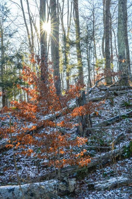 The Last of the Snow in the Woods