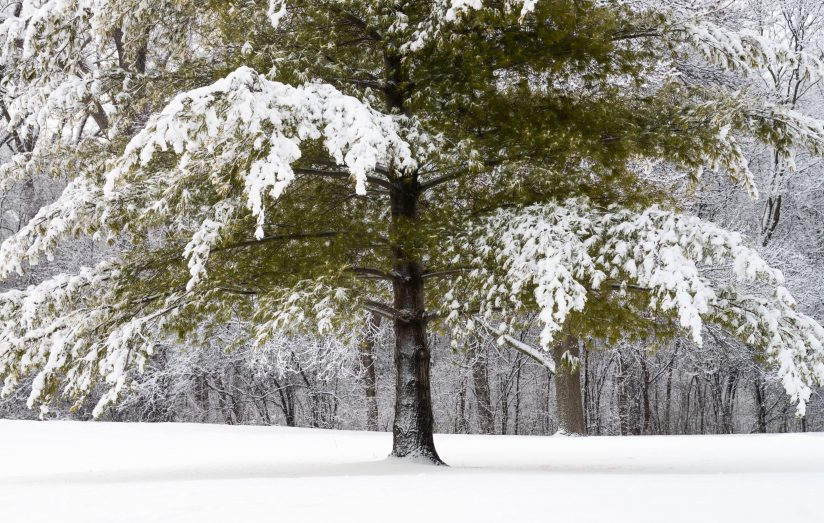 Snow on the Trees