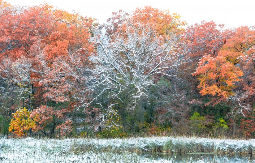 Late Fall or Early Winter?
