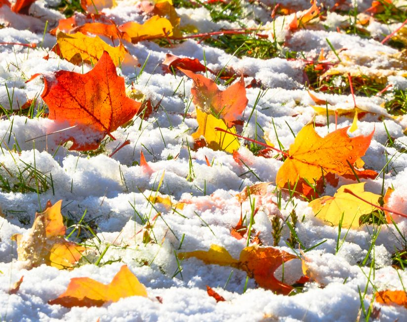 Fall Color After the Snow