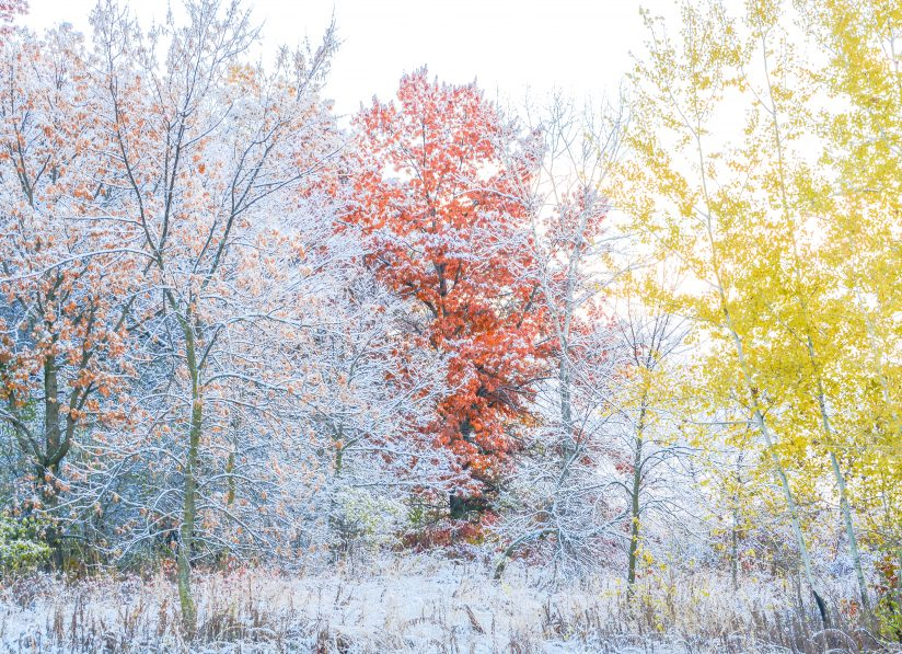 Fall/Winter Wonderland