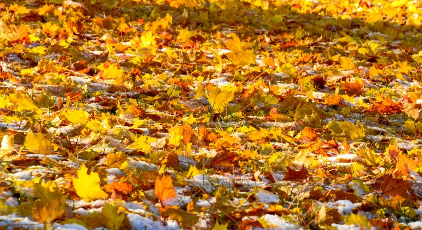 Fall Color Meets Winter Snow