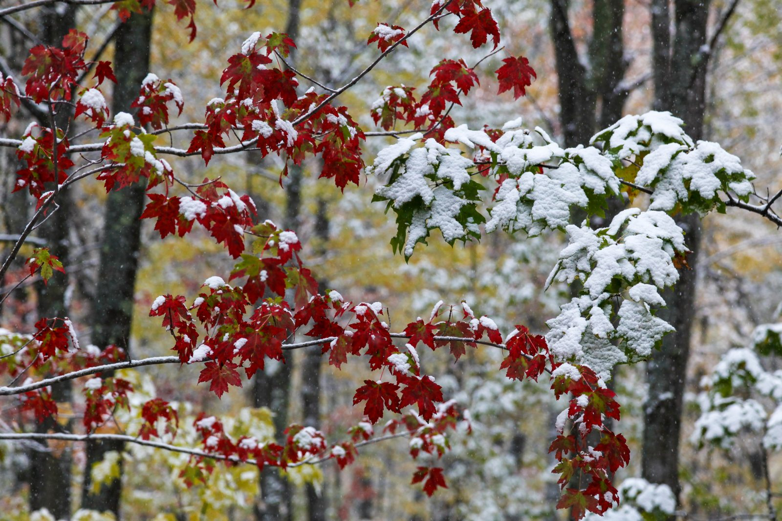First Snow of Autumn