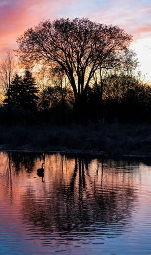 The Pond at Sunset