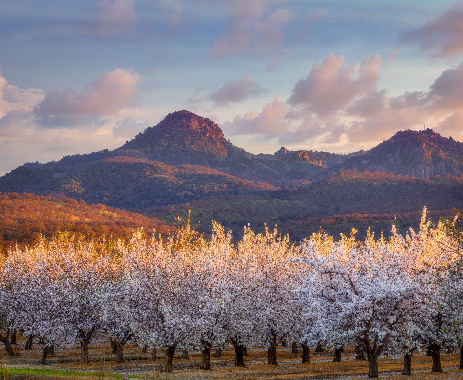 Sutter Buttes and Blooming Almond Orchards