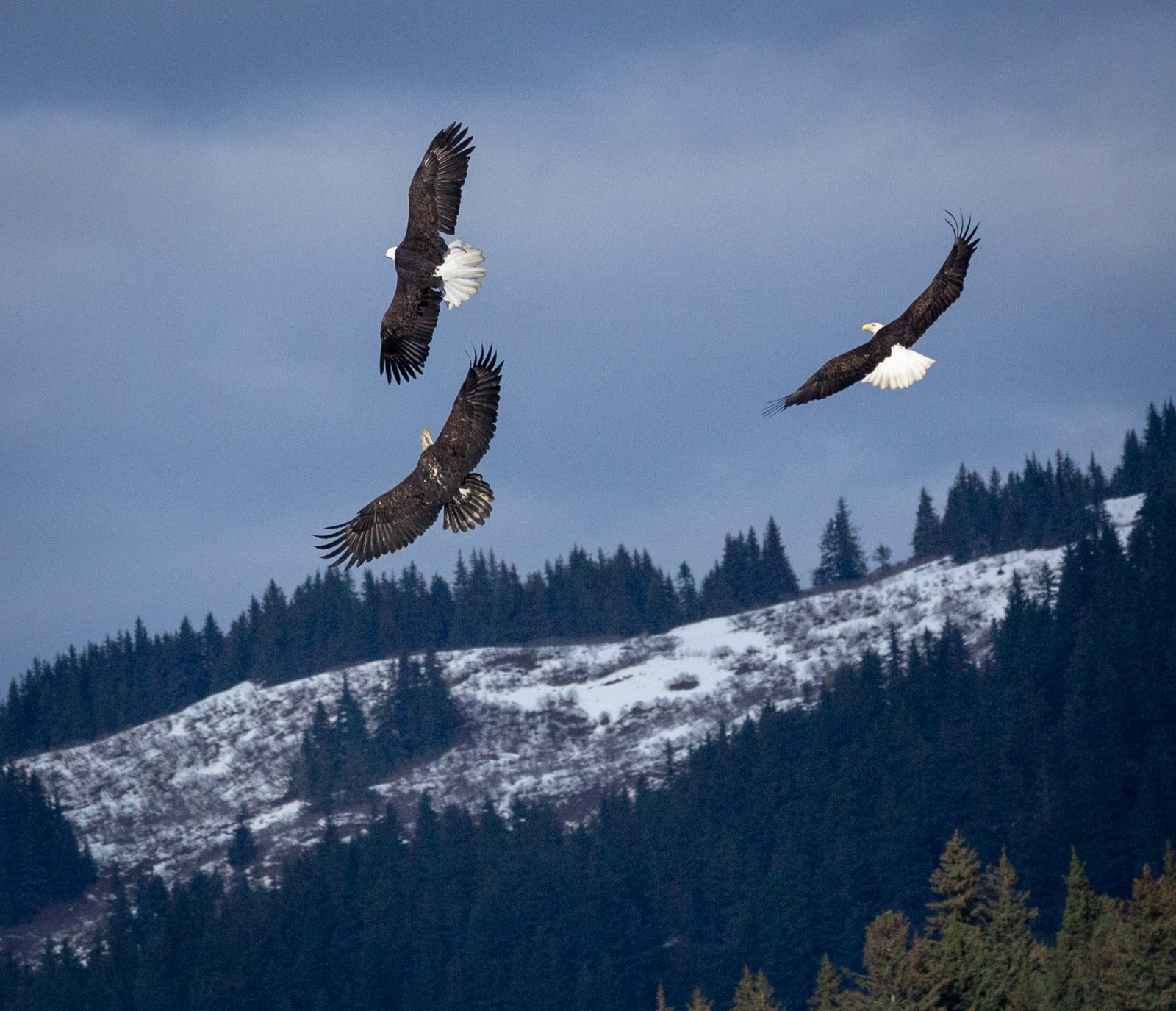 Eagles over at