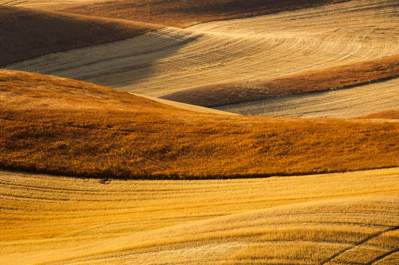 Fall in the Palouse