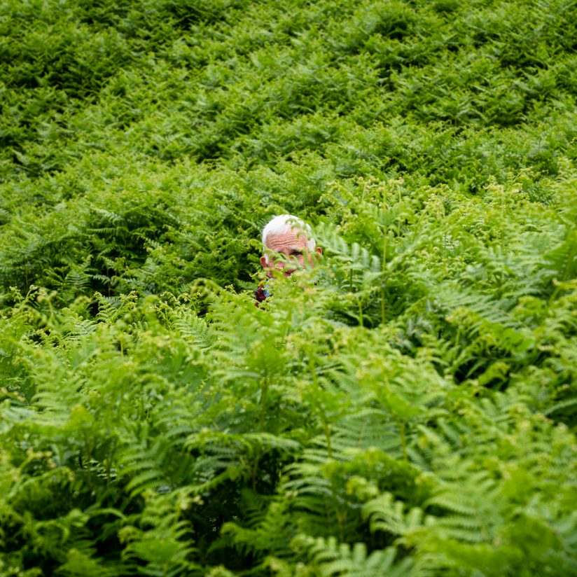Lost in the Ferns