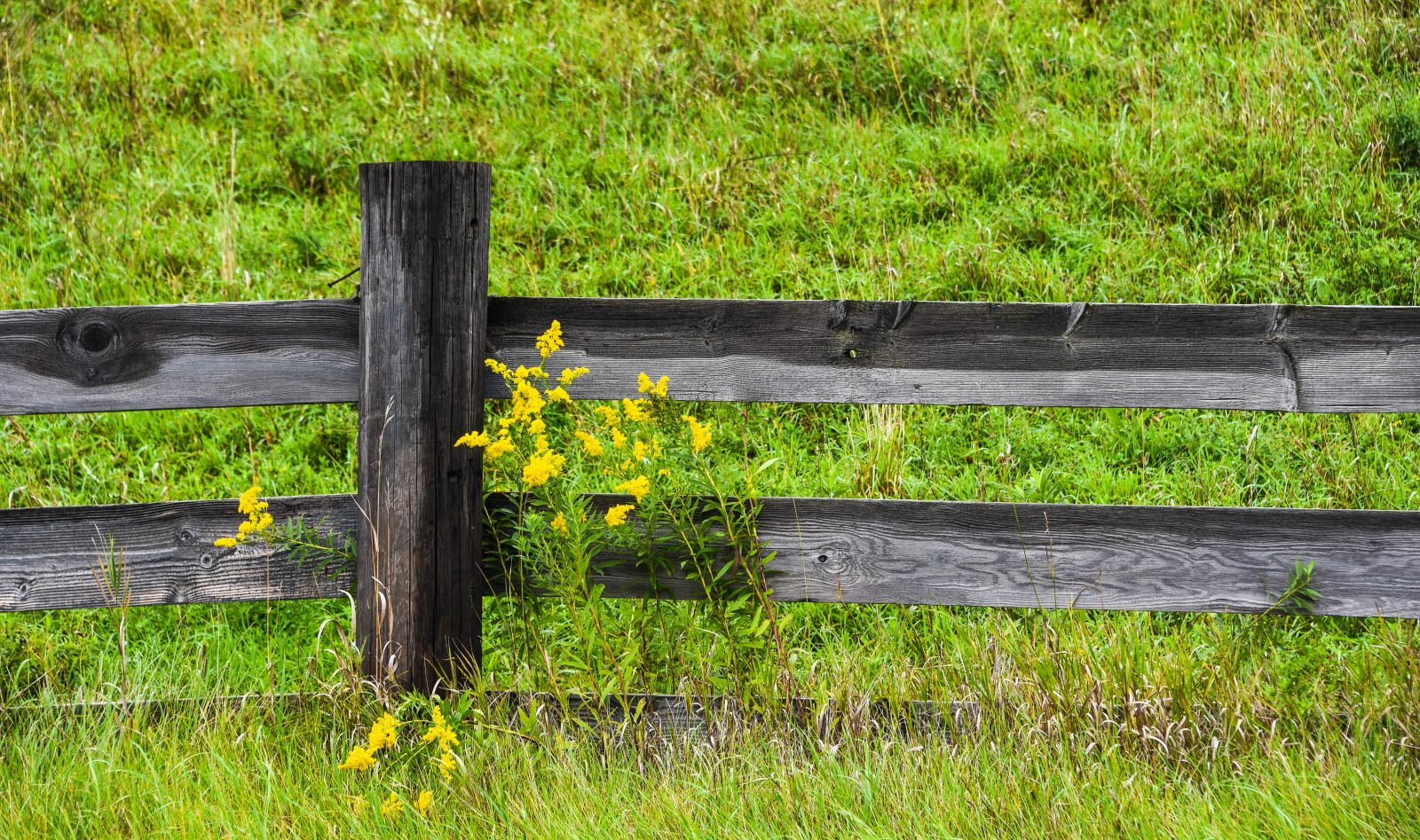 Flowers Along the Fence