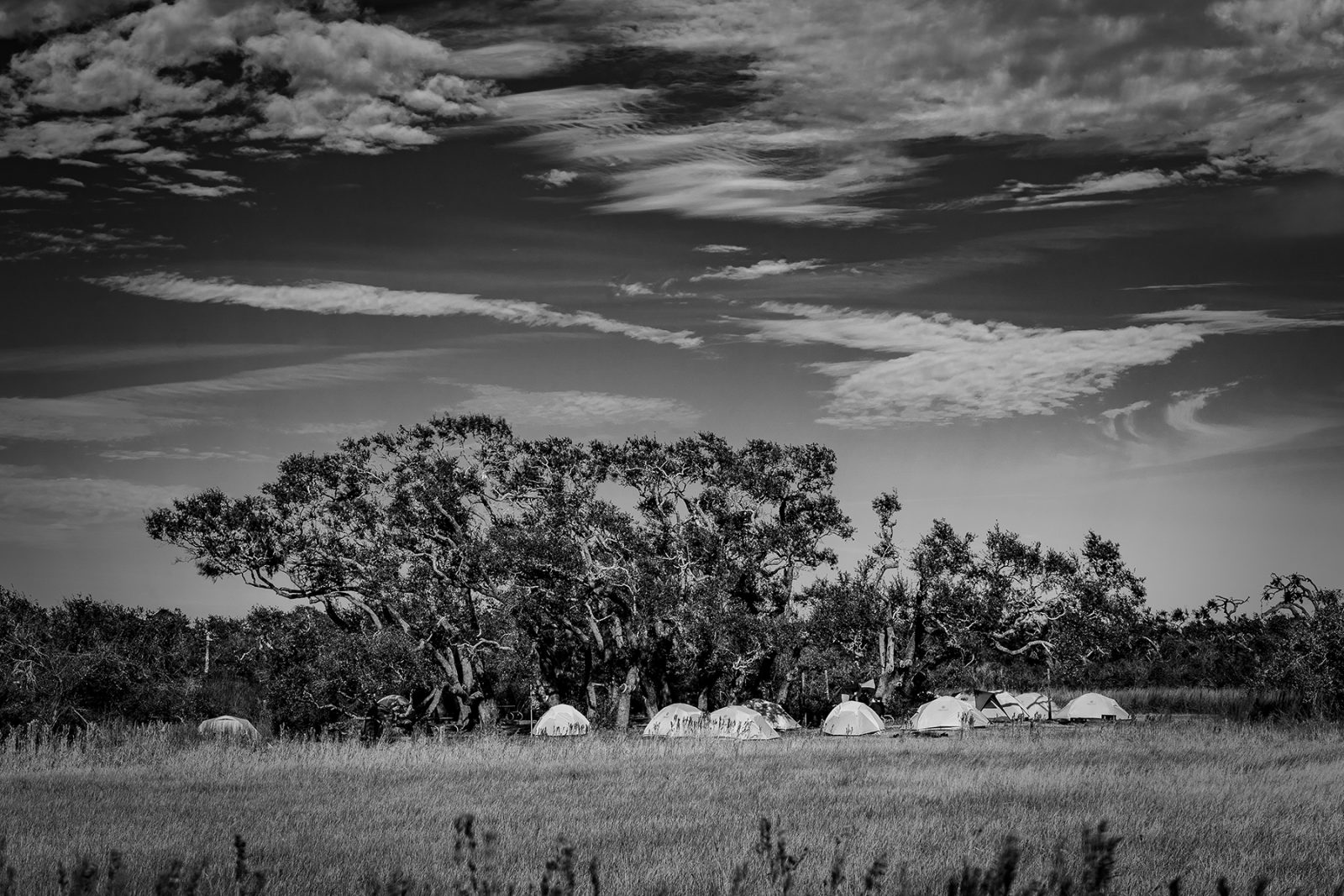 Camp under the tree