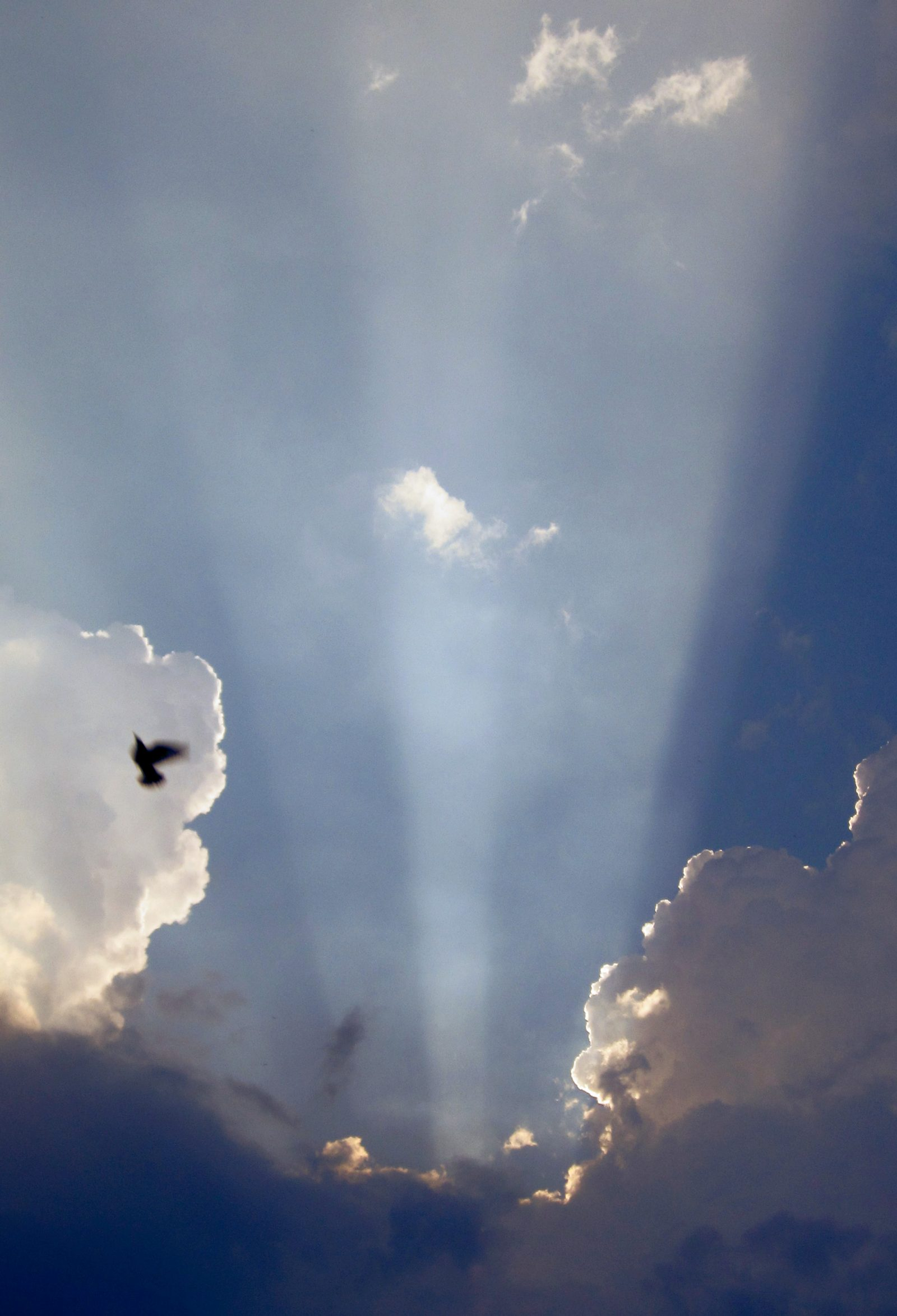 Sun Ray and Bird