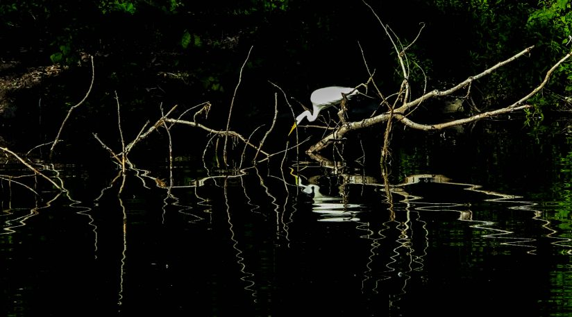 Reflections on the Pond