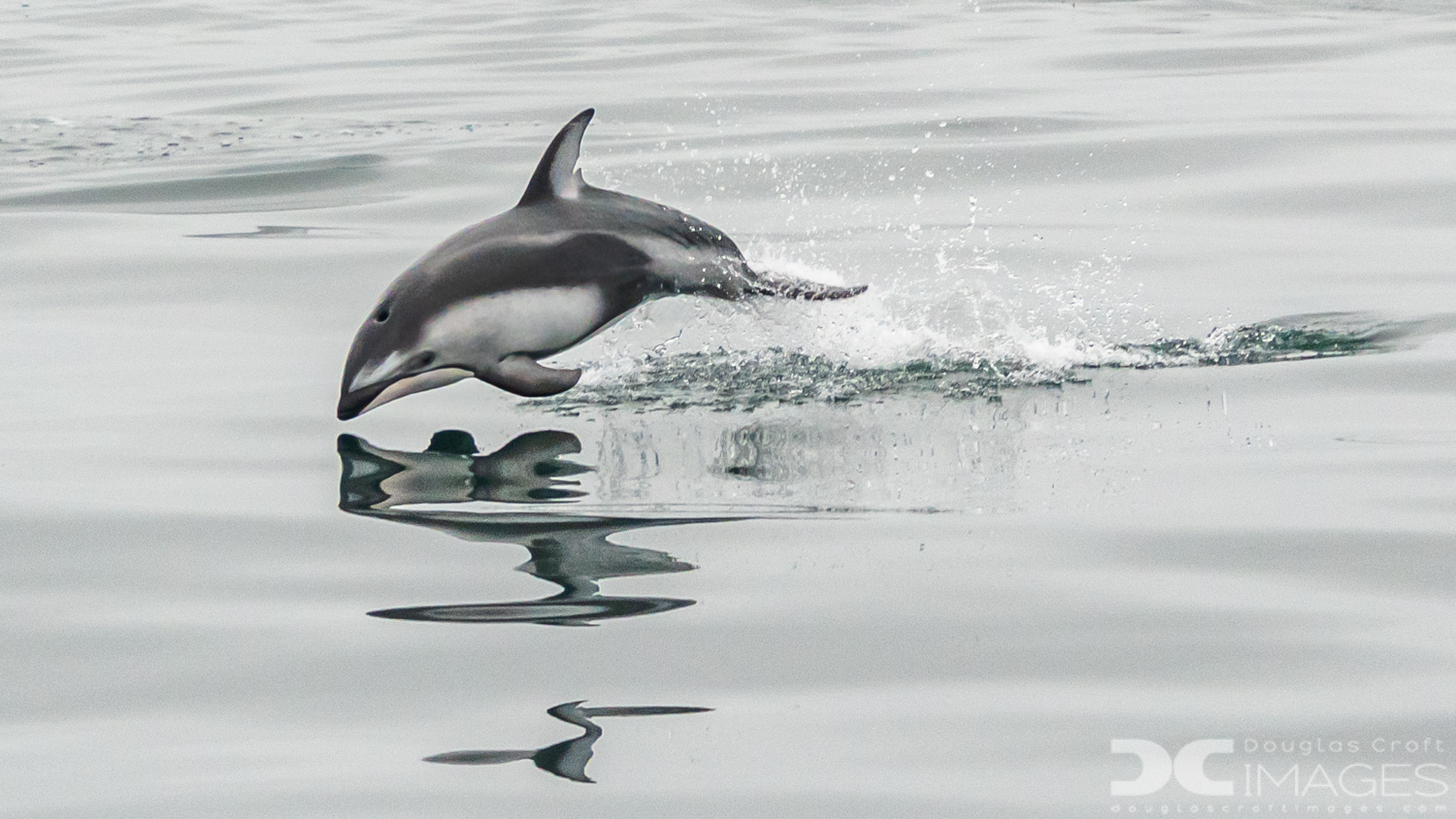 Dolphin Water