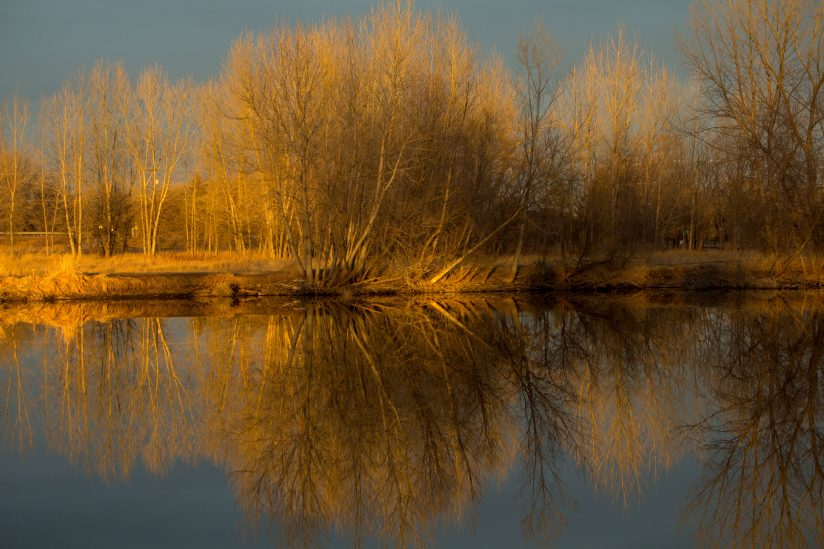 Last light reflected on bar branches and still water