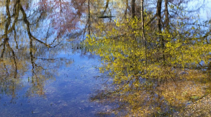Spring Tree Reflections