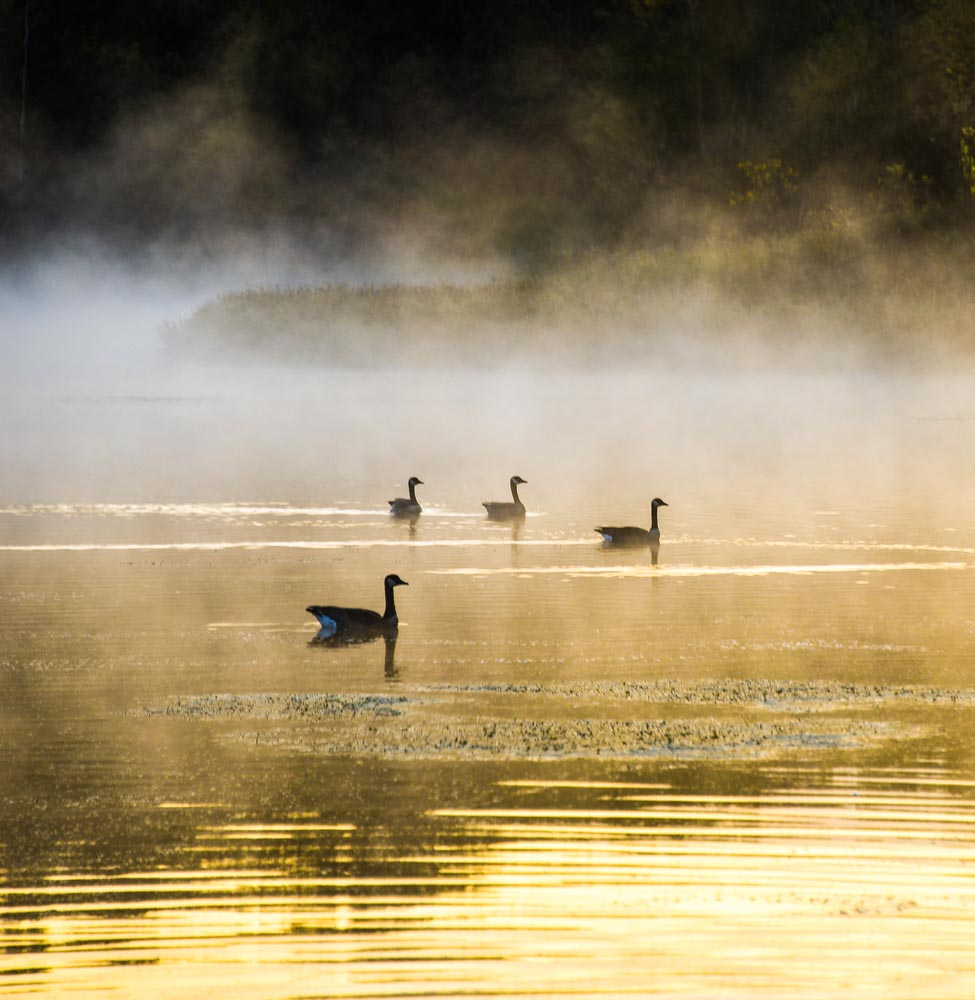 Morning on the Pond