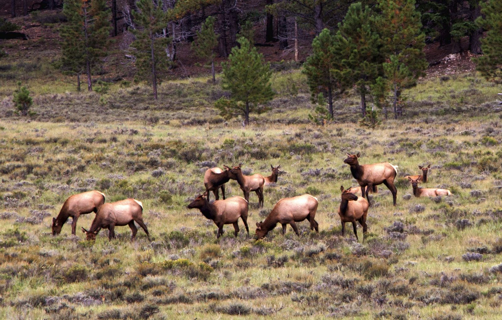 Grazing at Bryce Canyon