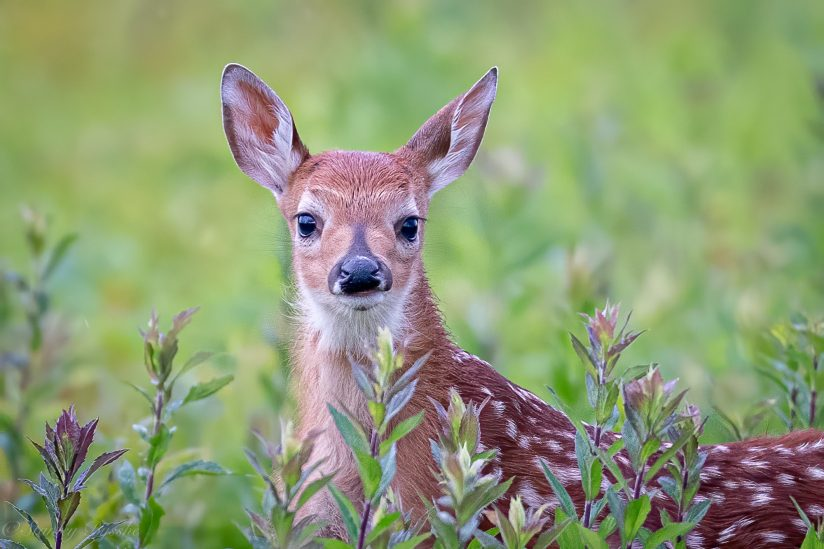 All a fawn can see.
