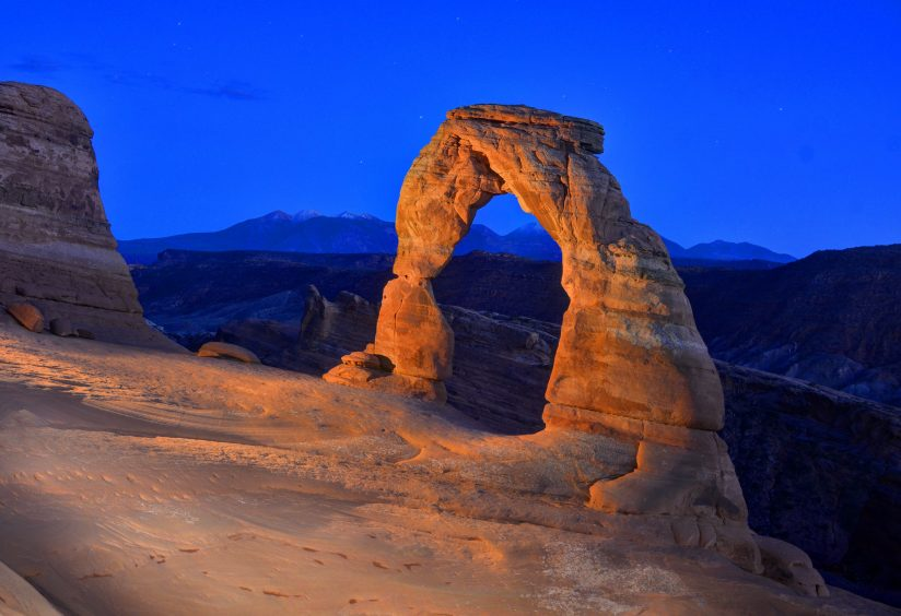 Delicate at Twilight