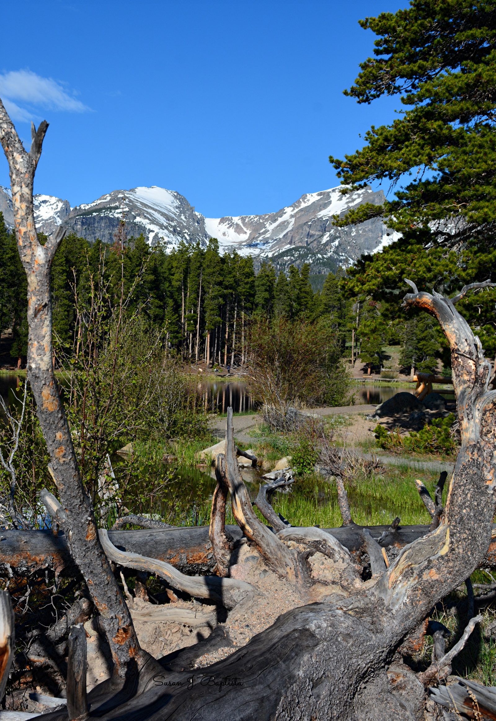 Tree Framed Mountains