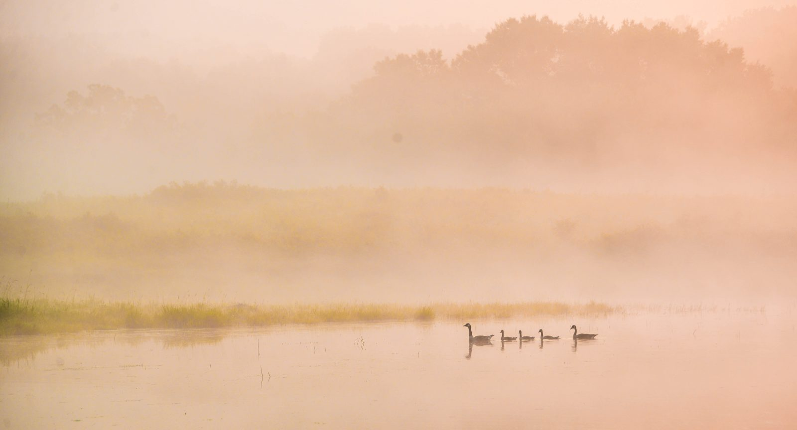 Summer Morning on the Pond