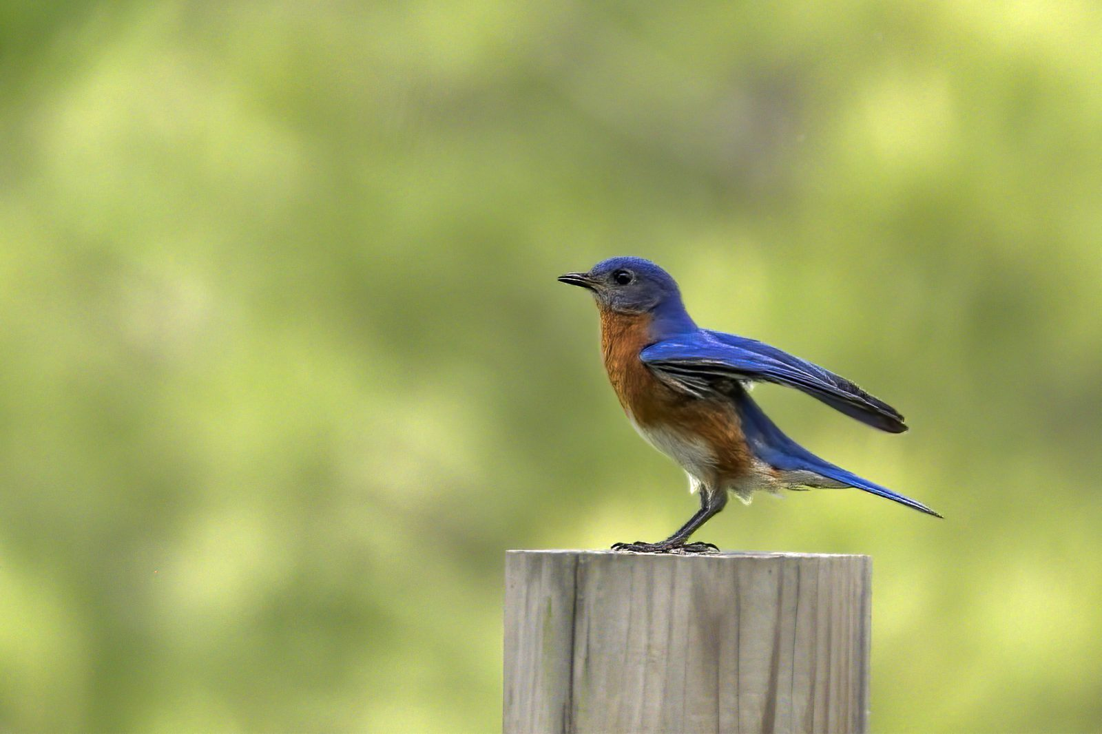 Bluebird ready to launch