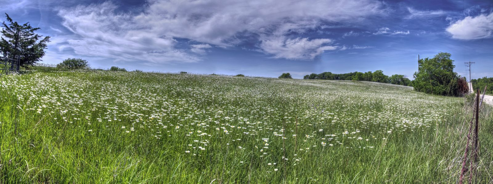 Acres of Flowers