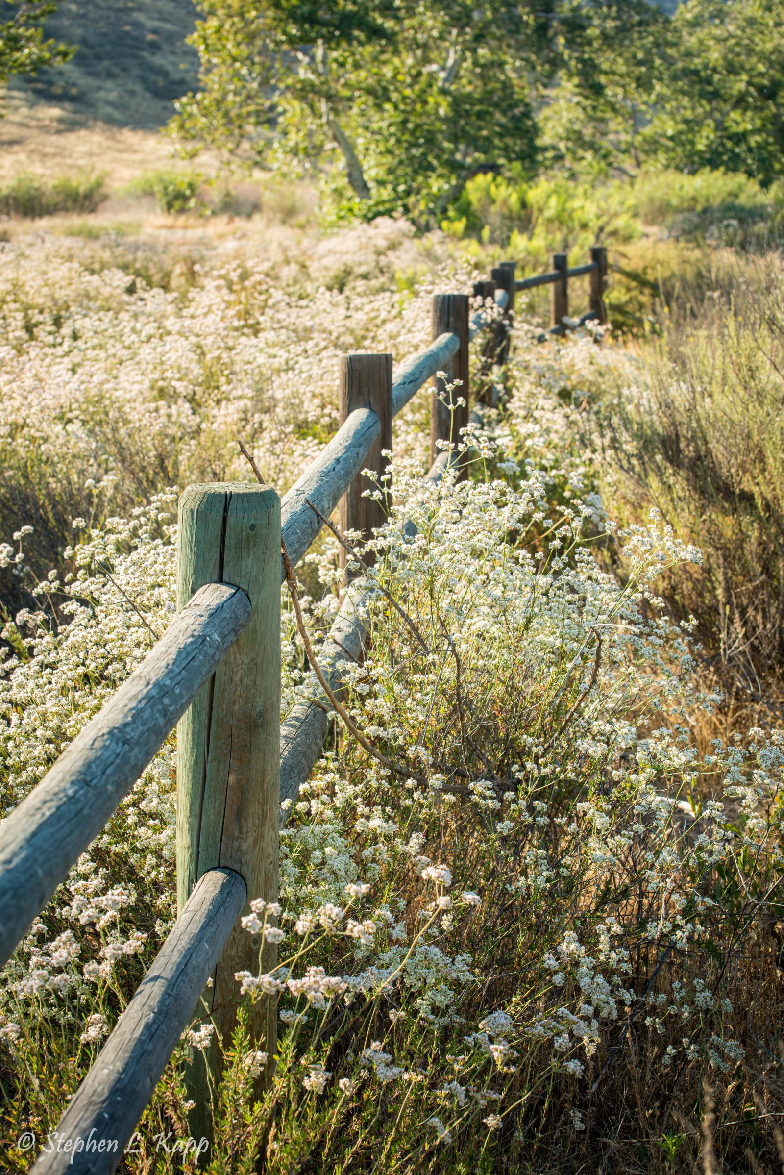 Rustic Wooden Fence and Field