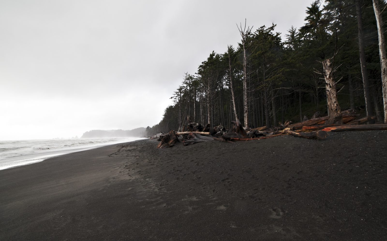Black Sand in Olympic National Park