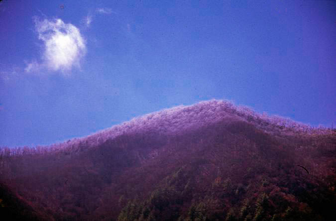 New Snow at the Great Smoky Mountains